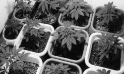 Encuesta cultivadores domésticos