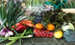 Frutas y verduras agroecológicas.