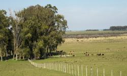Emisiones nacionales de CO2, CH4 y N2O de Uruguay para el año 2017